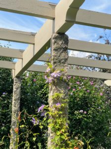 While strolling through the pergola, I saw some the season's last remaining clematis flowers. These lavender colored flowers climbing up the stone pergola brought me back to past trips to Italy, and other magical European countries with my family.