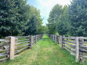 This view of the pathway leading up to the Winter House is one of my favorite places to stroll on the farm. With the calm breezes and beautiful view of the orchard, this little pathway is heavenly.