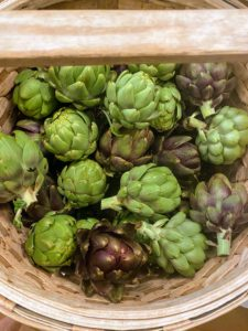 We harvest in the early morning. I like picking many vegetables while they are still a bit small. These artichokes are perfect.