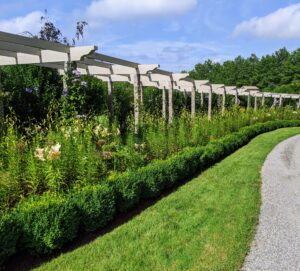 In early July, this pergola is filled with waist-to-shoulder-high lily stems.