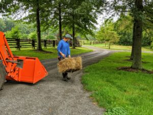 Chhiring carries a another bale of hay and drops it strategically where rain runoff may cause damage to the lawns and garden beds at the Pin Oak Allee.