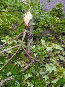 """This branch snapped off the tree and """"planted"""" itself into the ground."""