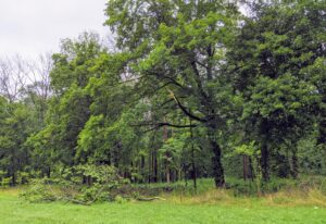 I am glad most of the trees survived the storm. Isaias moved fast, but it blasted through this area quite mercilessly.
