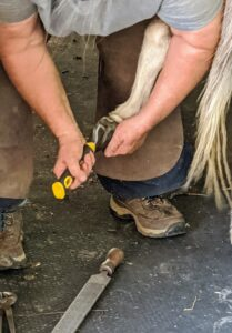 Linda begins the process all over again on the next hoof - first, removing any debris. Here, she is using a hoof pick. Picking out the dirt and mud is done every day, not just when the hooves are trimmed.