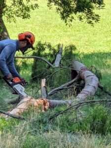 Larger trees and branches are cut up into smaller sections. Pasang uses our STIHL gas-powered chainsaw to cut up this fallen tree near my pond.