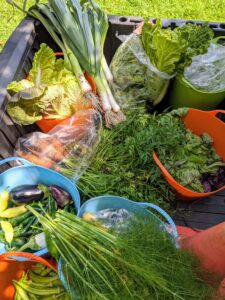 Everything is loaded onto our Polaris ATV and brought up to my flower room, where they get washed if needed, then bagged and stored in the refrigerator. The 90-degree weather has already started to wilt some of the leaves, but they will perk up. I know my family, friends, and staff here at the farm will enjoy these delicious vegetables.