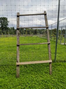 There is also a wide all-natural ladder made right here at the farm.