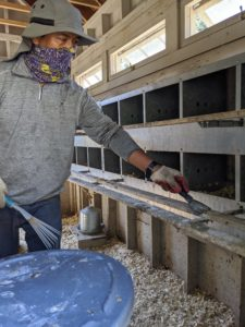 Dawa oversees the care of all the chickens, peacocks, geese, and pigeons. Here he is as he starts cleaning one of the coops. He first scrapes off any debris from the wooden perches.