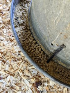 Here's a closer look at the pellets in the feeder.