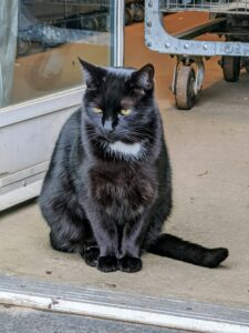 Here's Blackie waiting patiently by the head house door - perhaps waiting for an afternoon catnip treat.