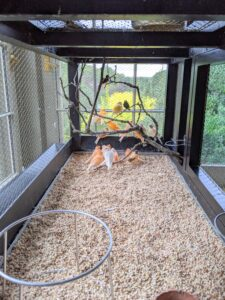 My canaries love it here on my porch – they can see so much of the activity around the farm from the big floor to ceiling glass windows and doors.