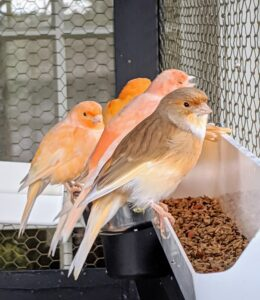 Seed blends are designed to support the birds' seasonal needs. These blends are carefully selected to provide the widest range of micronutrients for resting, breeding and molting seasons.