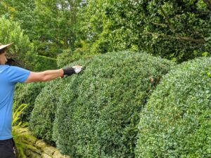 Nearby, Ryan is trimming the boxwood in the terrace garden outside my Winter House Green Parlor.