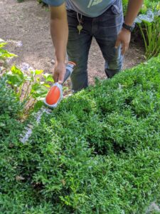 We're also using our new STIHL HSA 25 Battery-Powered Garden Shear. The hedge shear attachment with double-sided cutting blades cut both directions. It's one of our favorite tools – it's very light and handy.