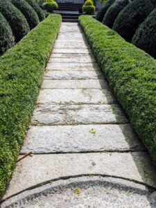The finished hedges look great. During the cold months, I always cover my boxwood to protect them from frost and wind.