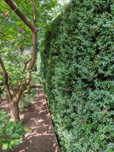 Surrounding the sunken garden on three sides is a tall American boxwood hedge. I love how it encloses the space. And because the Summer House faces a rather busy intersection, the wall of boxwood also provides a good deal of privacy.