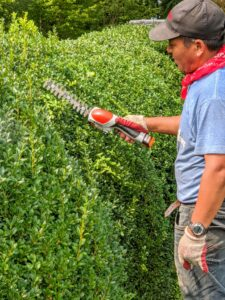 Phurba is excellent at trimming and sculpting the boxwood. First, he uses our STIHL HSA 25 Battery-Powered Garden Shear. The hedge shear attachment with double-sided cutting blades cut both directions. It's one of our favorite tools – it's very light and handy.