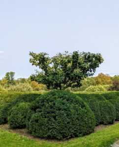 Here is a view from the corner of the peony garden with the ginkgo tree and the beautiful landscape beyond.