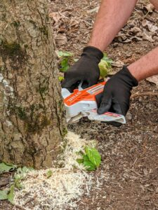 Ryan tackles the smaller of the two trees first using one of our handy STIHL GTA 26 Battery Garden Pruners. For a small tool, it is very useful for both cutting and pruning.