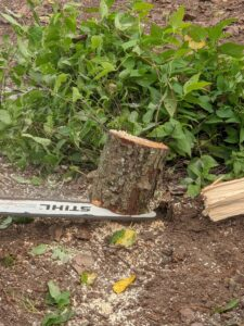 The second cut is made to make what is left of the stump as flush to the ground as possible. STIHL's most well known tool is the chainsaw. All STIHL chainsaws are equipped with a chain stopping system designed to reduce the risk of injury.