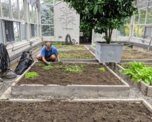 Brian starts by removing any last remaining crops and weeds out of each box. These raised beds are already filled with good topsoil and composted manure mix. No matter how great the topsoil is, always use compost in the gardens and be sure to add fresh amounts every year.