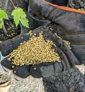 Osmocote is a controlled-release fertilizer. A polymer yellowish coating made from resin and vegetable oil covers the small balls of fertilizer, called prills, allowing a slow release of nutrients.