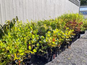 I also have many young specimen plantings in an area next to my hay barn not far from my Equipment Barn.