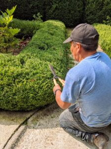 A couple times a year, we groom and prune the boxwood. This is done with hand shears to give them a more clean and manicured appearance.
