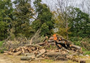 This wood pile is getting quite large – felled trees, branches, leaves, etc., but none of the material ever goes to waste.