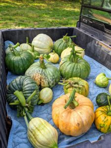 Ryan actually picked quite a few pumpkins, which will be added to the enormous amount of pumpkins picked from this year's patch.
