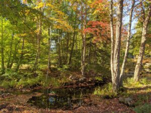This was taken a few days later at a brook near the Somesville Historical Museum and Gardens. Here, the leaves are showing gorgeous colors of red, gold, and brown.