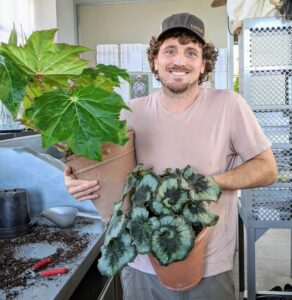 Ryan moves the begonias into the greenhouse and arranges them so there is ample space in between each pot.