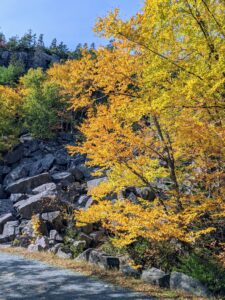 And here is more fall foliage seen along the carriage road – the golden fall colors are so beautiful.