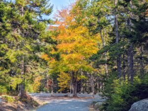 And a beautiful golden-yellow maple tree at the end of this carriage road. Thanks for these lovely fall images, Cheryl. What colors are you seeing this autumn? Share your comments below.