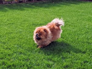 It is so important to provide dogs with ample exercise to keep them physically and mentally fit. I make sure my dogs get good long walks, and lots of time to play with each other outdoors.