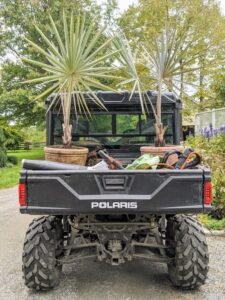 Both palms are then loaded into our trusted Polaris Ranger. I love these vehicles. We use them every day around the farm for transporting plants, equipment, storage bins, etc. And these all terrain vehicles can get through places other vehicles cannot.