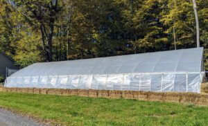 Here is one of two large hoop houses at my farm, and one of five total greenhouses. This year, I decided to store all my citrus plants here. The weather in the Northeast is starting to get chilly, especially at night - temperatures are now in the 40s and 50s, so it is important to get started on this process. In general, there is more room at my Bedford, New York farm to store my warm-weather specimens, so many from Maine and East Hampton are also returned here after the summer.
