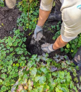 Domi mixes the fertilizer with the existing soil in the hole.