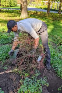 To remove the tree from the pot, Domi taps on the sides to loosen the soil.