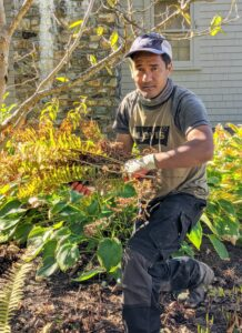 Meanwhile, Pasang cuts back the ferns that have browned, and does some weeding around the garden bed.
