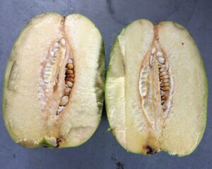 Here is the inside of the Chinese quince. In this one, the seeds are white.
