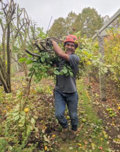 Pasang collects the pruned branches, so they can be chipped and reused as dressing in the woodland.