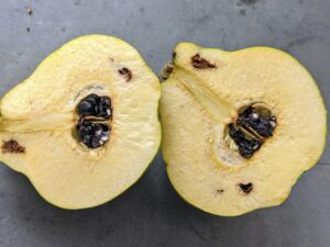 Quince fruits are only edible when cooked. The seeds contain nitriles, which are common in the seeds of the rose family. They can be toxic when eaten in large quantities.