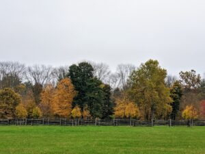 The perimeter around my paddocks displays such wonderful shades of amber, brown, orange and green. I also get many compliments on the fencing around the farm – it is antique spruce fencing I bought in Canada, and it surrounds all my paddocks for the horses, pony and donkeys.