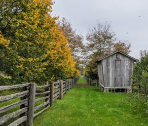 Another popular vantage point is this one looking down between the paddocks with the corn crib on the right and the row of lindens on the left with all the bright yellow leaves.