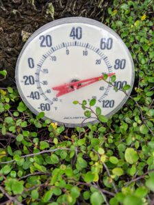 To simulate the best subtropical environment, we try to keep the temperature in this greenhouse between 50 and 85-degrees Fahrenheit with some humidity.