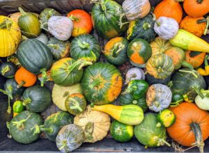 In just a short amount of time, this Polaris was filled with a variety of pumpkins, and ornamental gourds. Pumpkins are a good source of nutrition. They are low in calories, fat and sodium and high in fiber. Plus, they are loaded with vitamins A and B and potassium.