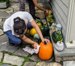 Once all the pumpkins were picked and loaded, they were transported and displayed outside my Winter House. Elvira wipes each one down with a damp cloth to remove any dirt and debris left from the garden.