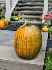 This is our largest pumpkin this season - it's nearly two feet tall!