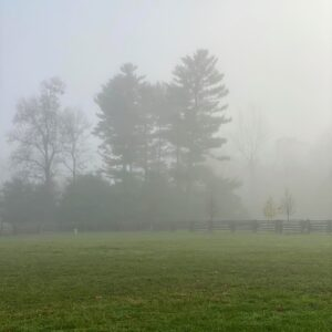 Fog can form in two ways: either by cooling the air to its dew point or by evaporation and mixing – this happens often when the earth radiates heat at night or in the early morning.
